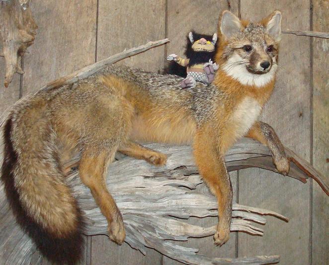 red fox. Red Fox